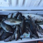 fish caught on Ocean City charter in a cooler